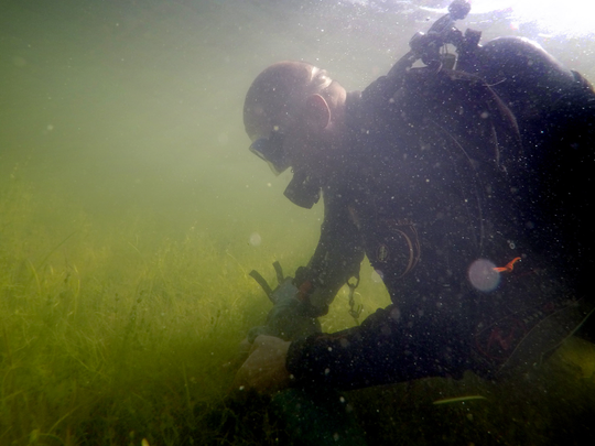 A diver works as part of a volunteer team that tried to rid Little Muskego Lake of starry stonewort in 2015. Despite their efforts, the lake algae spread.
