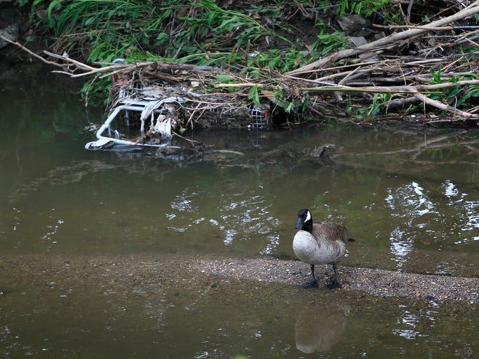 A duck stands in Pleasant Run Creek not far from a shopping cart lodged among debris on the creek's bank where it runs along the north side of Manual High School on May 15, 2014. Before flowing through Garfield Park and the Manual property, it first runs through the old Indianapolis Coke plant at 2950 Prospect St., which has a number of lingering environmental contaminates.