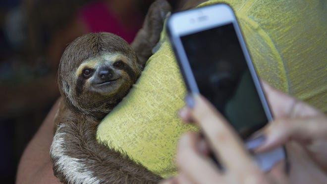 """A handout picture released on October 4, 2017 by World Animal Protection shows a tourist taking a photo of a woman posing with a sloth in an unspecified location in Brazil on October 22, 2016.   The craze for tourists taking selfies alongside wild animals then posting on Instagram is fueling cruel treatment of iconic species in the Amazon, activists warn. The charity World Animal Protection said in a report that Instagram has seen a 292 percent increase in wildlife selfies since 2014 around the world. Of these, more than 40 percent involved humans """"hugging or inappropriately interacting with a wild animal."""" In the Brazilian Amazon city of Manaus 18 tour companies said they offered opportunities on 94 percent of trips to """"hold and touch wild animals as photo props."""" Some animals are captured and often battered to make them perform for tourism businesses and survive as little as 6 months when this happens."""