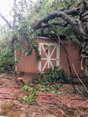 A tree was lifted from its roots and damaged a shed during a thunderstorm at the Tularosa Public Libray Wednesday, July 19.