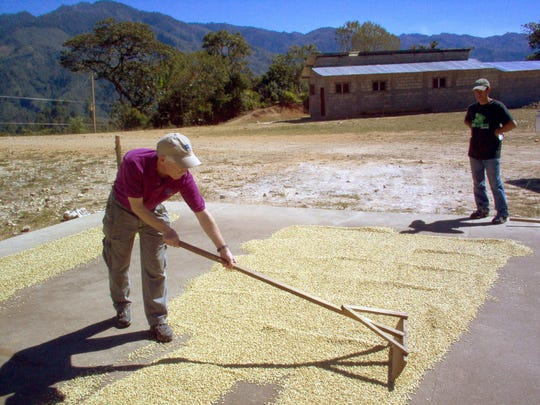 Rick raking drying coffee on patio in Capucas,Honduras