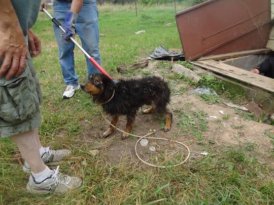 Clark County Dogs 5