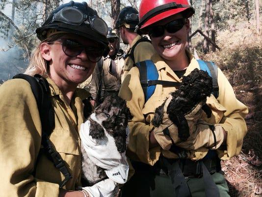 Mountain Lion Cubs Re_Hert (3).jpg