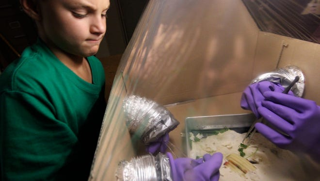 """In the class """"Alien Autopsy"""", students work in a quarantine glove box to protect Earth from contagion while learning how Tortilla volante, (Flying Tortilla), is like humans and different. They have fun learning the basics of biology and scientific inquiry, then reporting what they found. Teachers will get a preview of that program, along with others, during the Teacher Open House to be held Saturday, Nov. 5."""