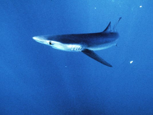 Shark fin soup banned in Nevada