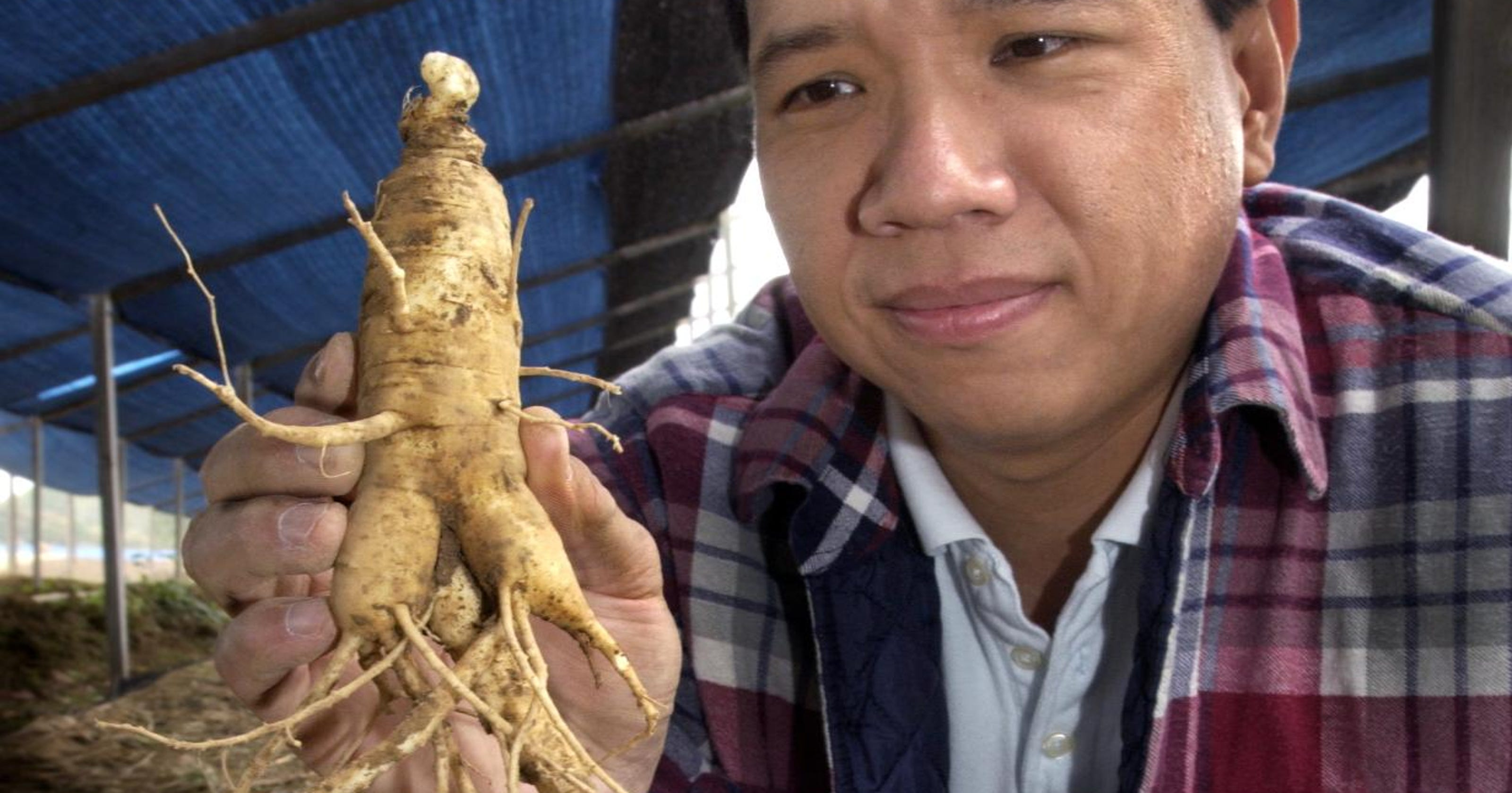 Ginseng: A lucrative, risky, sometimes illegal Indiana