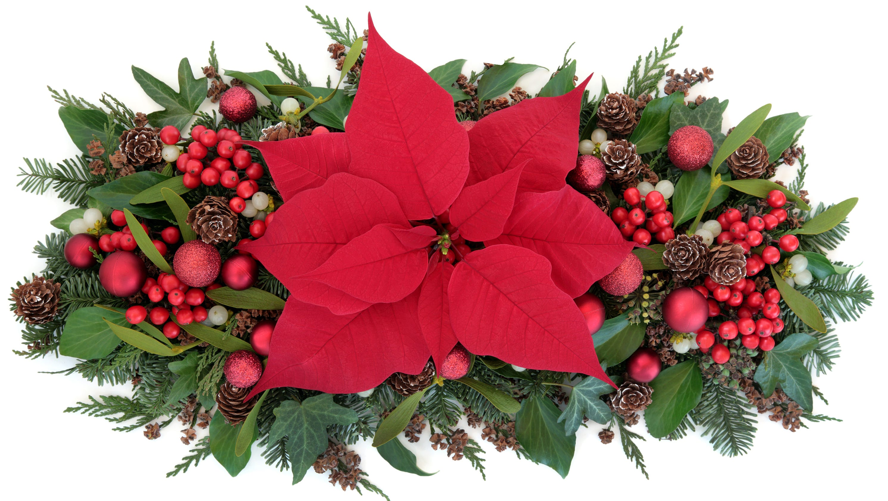 Christmas plant legends meanings biocorpaavc Images