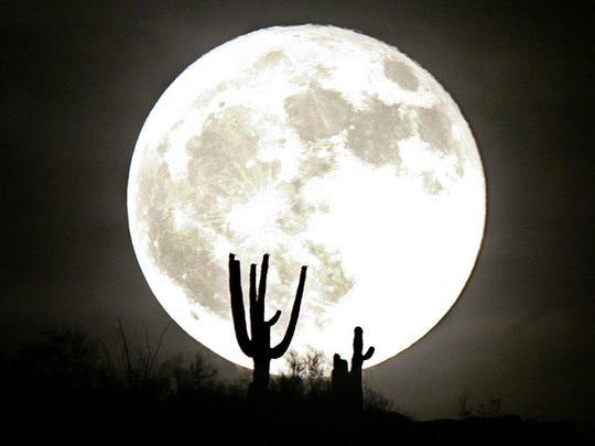 Saquaro cacti are silhouetted by a full moon rising