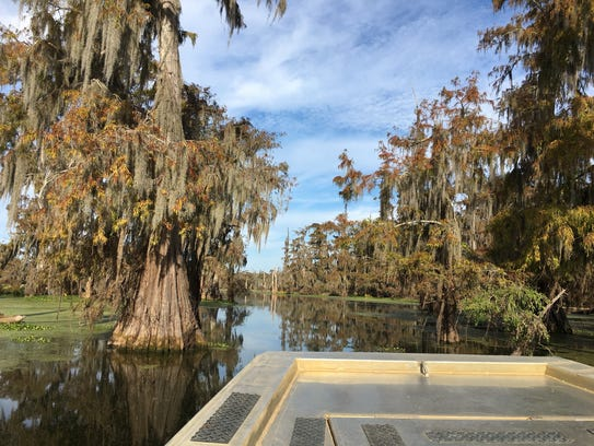 Champagne's Cajun Swamp Tours takes you by boat through