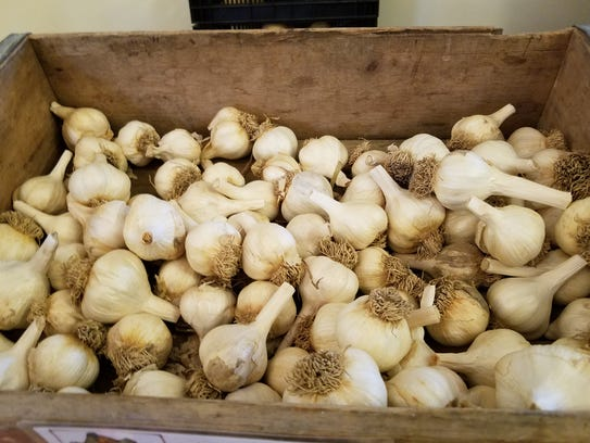 Heads of garlic are available at winter markets in