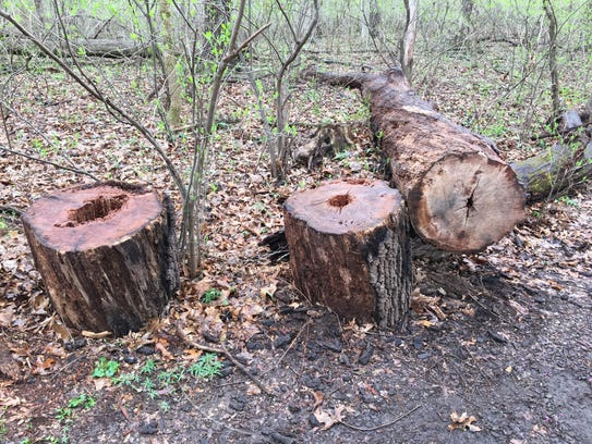 Answer Man: Why are trees coming down at the Springfield