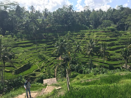 Rice terraces in Ubud, Bali on April 23, 2017.