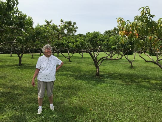 Joyce Foster examines the peach orchard at her Mason