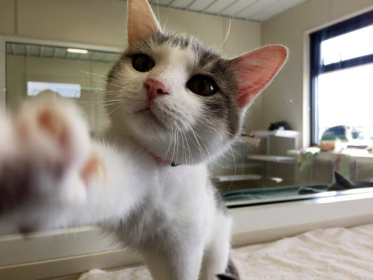 The Humane Society of Sandusky County has about 180