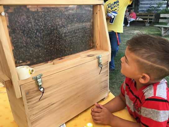 Makade Quick, 5, of Fremont looks at bees swarming