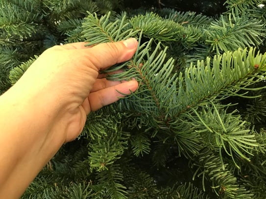 When picking a real Christmas tree, make sure to bend