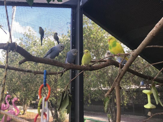 The new Parakeet Encounter exhibit at The Shell Factory