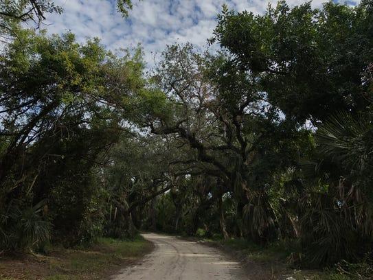 The Historic Jungle Trail near Pelican Island Wildlife