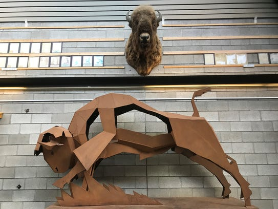 Bill Scriver bison in the Great falls High field house.