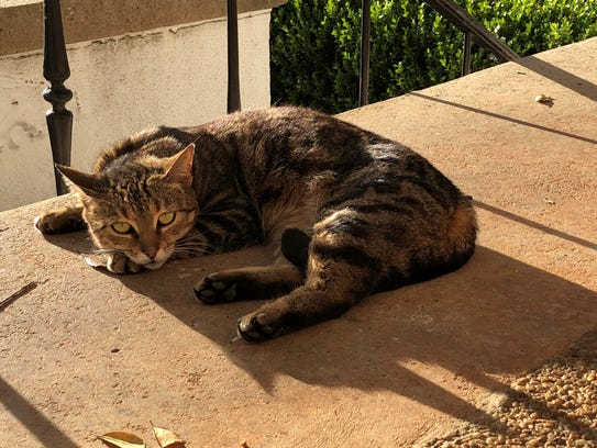A cat rests outside the Tallahassee Democrat who was