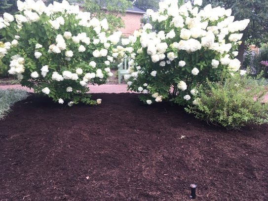 After mulching in the Moon Garden at Minnetrista