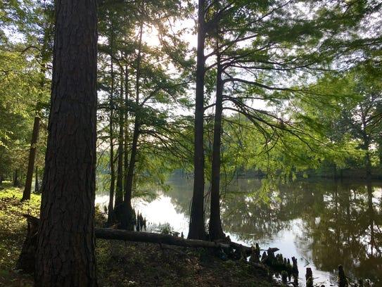 A trail runs along Bayou Slough Lake at Chemin-A-Haut