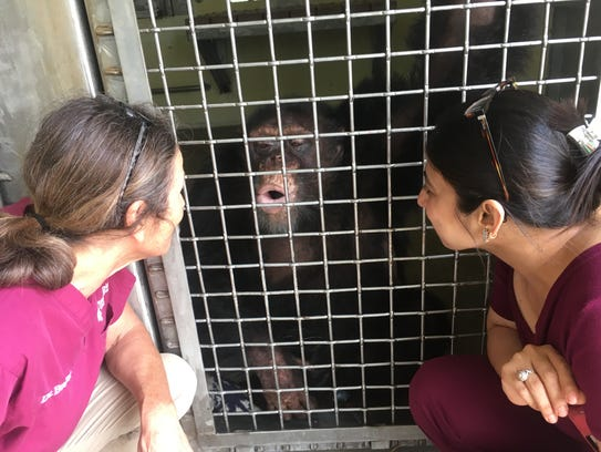 Dr Jocelyn Bezner of Save the Chimps and Mumbai veterinarian