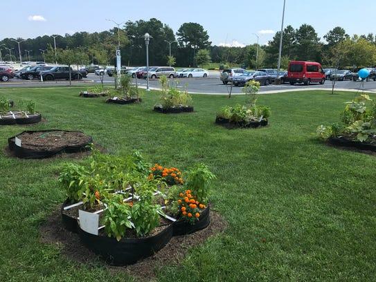 Wor-Wic Community College's community garden consists