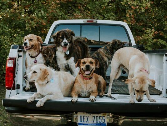 636499754470886300-group-dogs.JPG