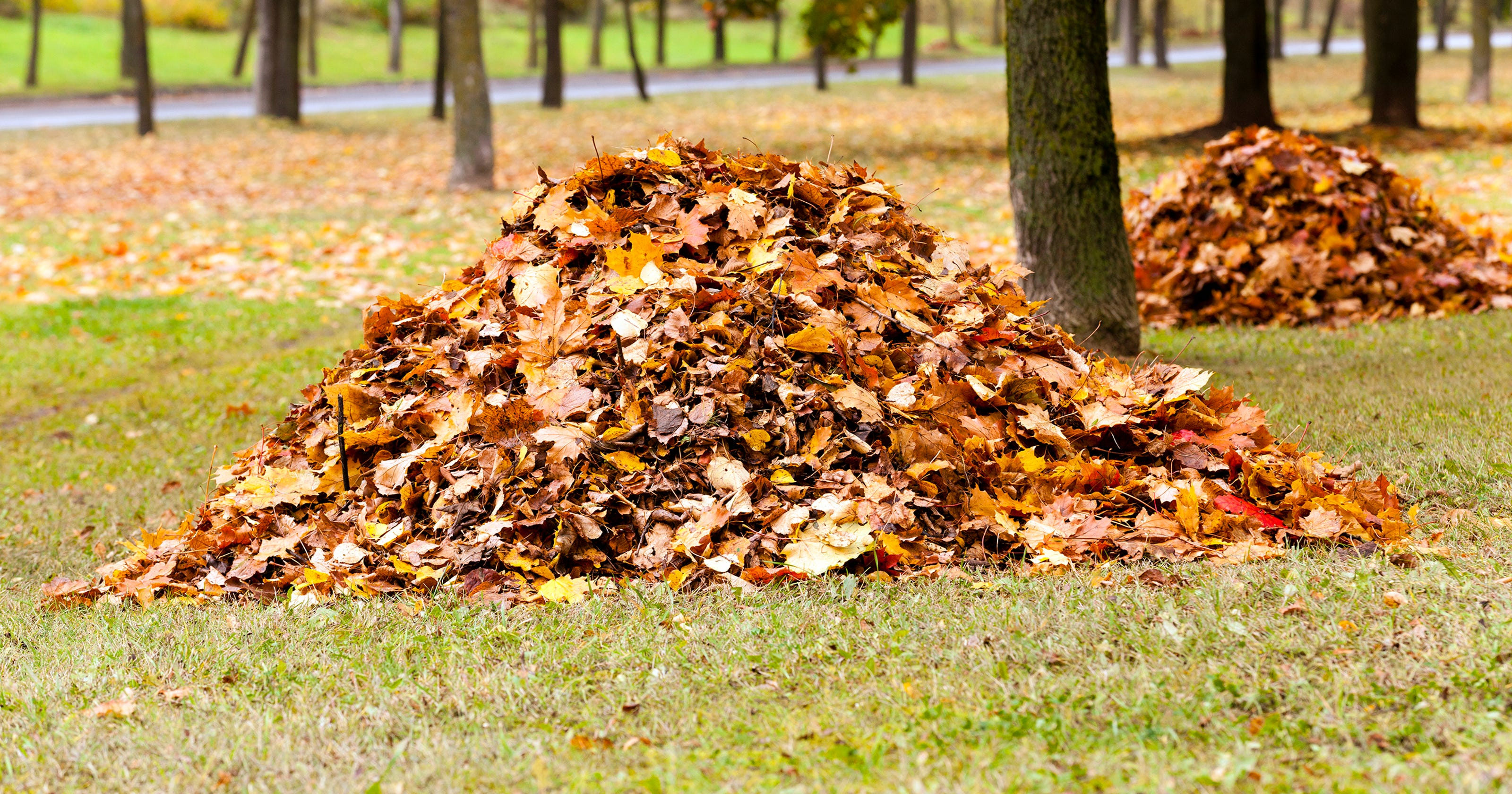 Here's why you should avoid raking your leaves