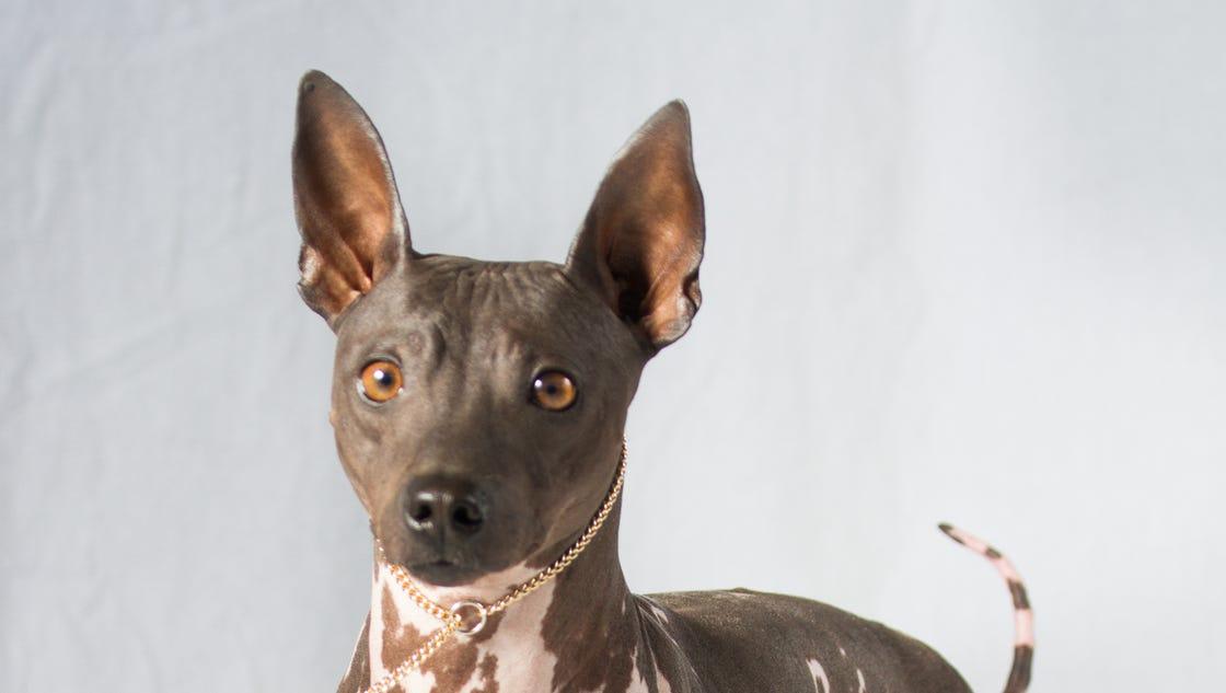 2 new dog breeds recog...