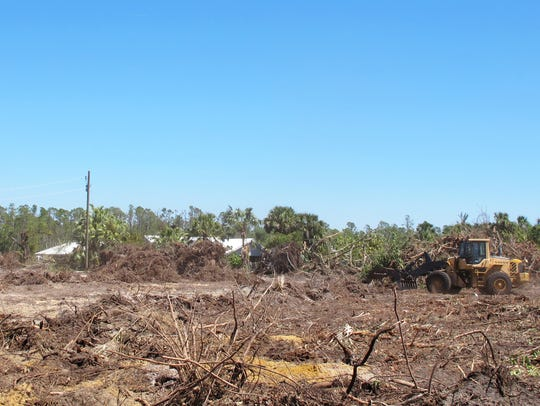 Neal Communities began clearing more than 38 acres along County Barn Road in March for Marquesa Isles of Naples, a gated community of twin villa homes in East Naples.