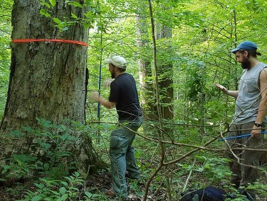 636392686117596477-Yellowwood-BCA-Logging-Pic.jpg