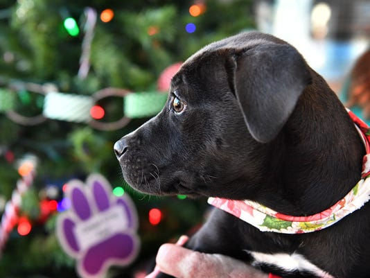 Cute Christmas Puppies.Some Owners Dump Old Animals For Cute Gifts