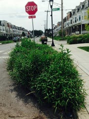 Every bed had overgrown weeds. Some weeds were at least 4 feet tall, making it difficult for the driver to see at the stop sign.