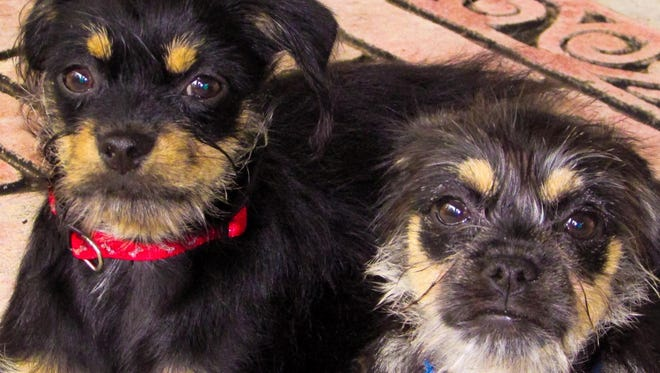 Ponce and Monkey have settled into their new forever home.