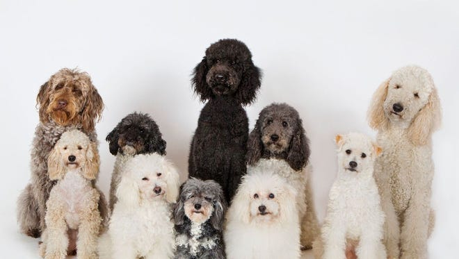 The canine cast of Olate Dogs consists entirely of rescue dogs.