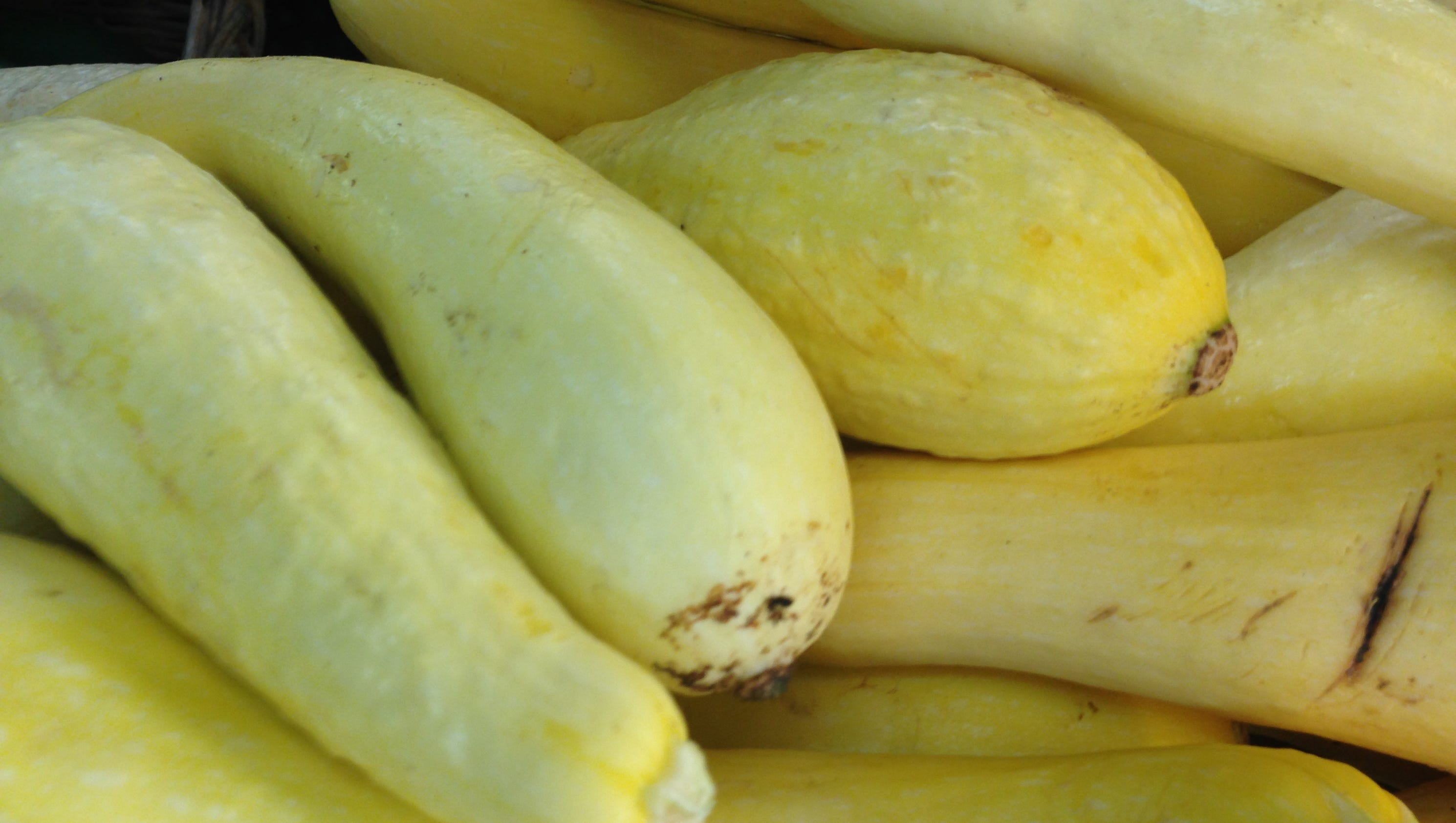 Farm to Fork: Southern baked yellow squash
