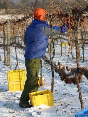 Ice wine flavor varies based on the type of grape used. Oliver Winery uses Vidal Blanc.