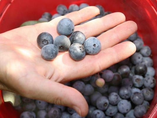 IMG_IMG_Blueberries2.jpg_1_1_3DB3VJOO.jpg_20150618.jpg