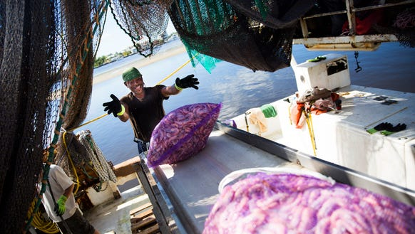 Shaun Hunte tosses an onion bag filled with pink shrimp