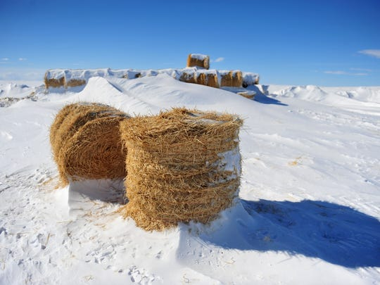 Raymond Michaels' hay bales are key for getting his