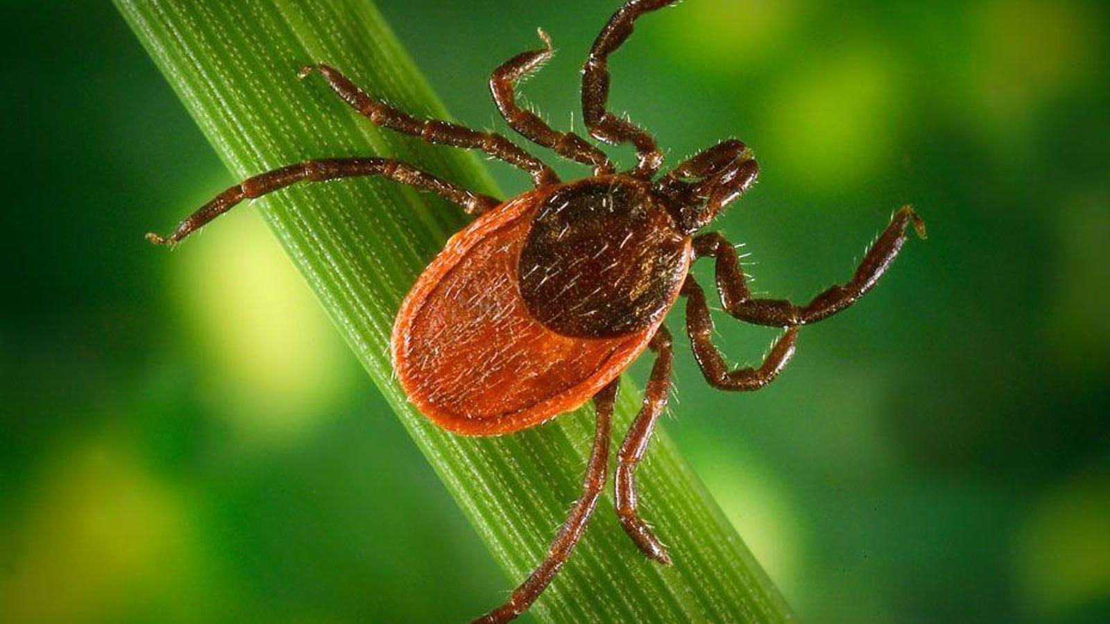 Mild winter, wet 2018 may cause surge in ticks in NJ, Northeast