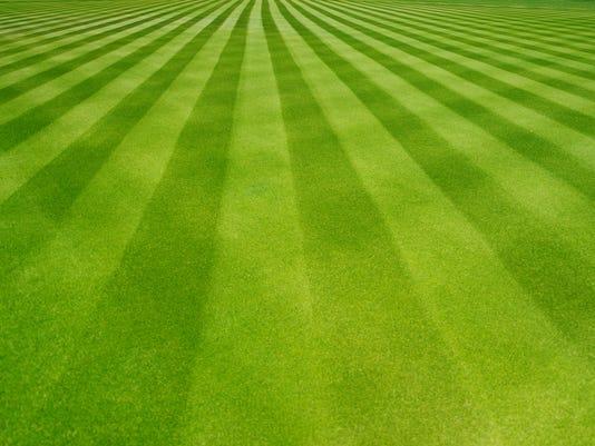 Great grass