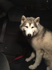 Kodi was safe and sound and a suspect has been taken into custody with charges pending.