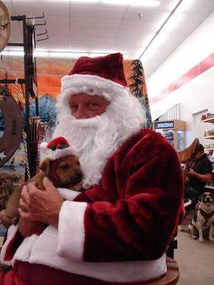 """This puppy felt right at home in Santa Paw's beard Sunday during the Humane Society's first Santa's Special Season Smiles event. More than  100 pets and their owners came to the Tractor Supply Co. store for the event. Twenty-four animals received a low-cost microchip, but some only wanted their pictures taken with """"Santa Paws"""" (aka Rocky Eagle). Several puppies found good homes in time for the holidays. There will be one more opportunity before Christmas to pose your favorite furry friend with Santa Paws, on Saturday from 9:30 to 11:30 a.m. at the Deming Animal Clinic at 2117 Columbus Rd."""