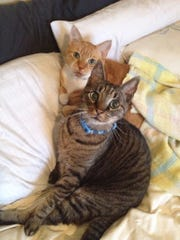Amber Solnick's cats, Bruce and Boris, ready for action. Bruce recently died.