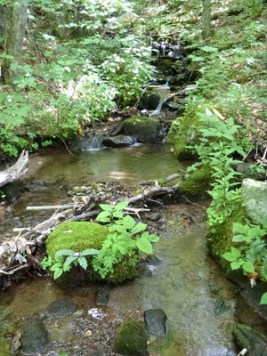 A headwater tributary of Broad Branch runs through the newly conserved property in Pisgah National Forest, emptying into the trout waters of Big Rock Creek.