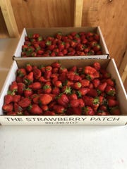 Customers can purchase pre-picked strawberries or pick