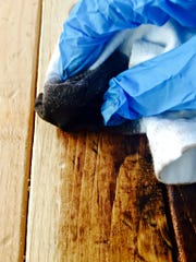 Apply the stain to the wood using a soft cloth.